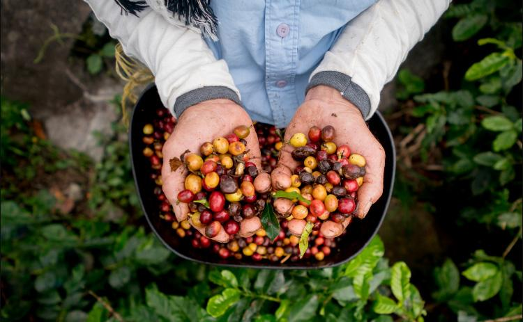 Pacific Bag is Fighting Coffee's Archenemy